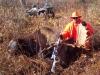 55 inch Bull Moose
